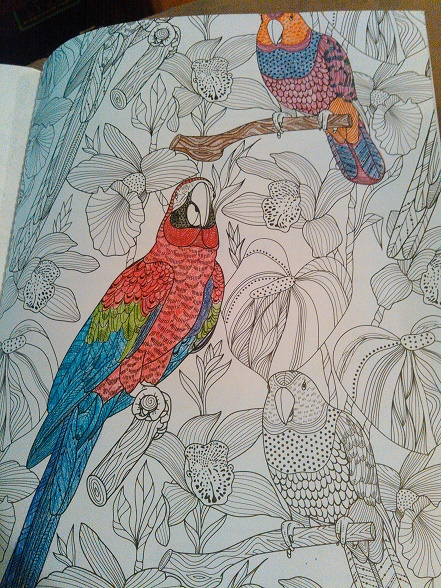 adult coloring book page
