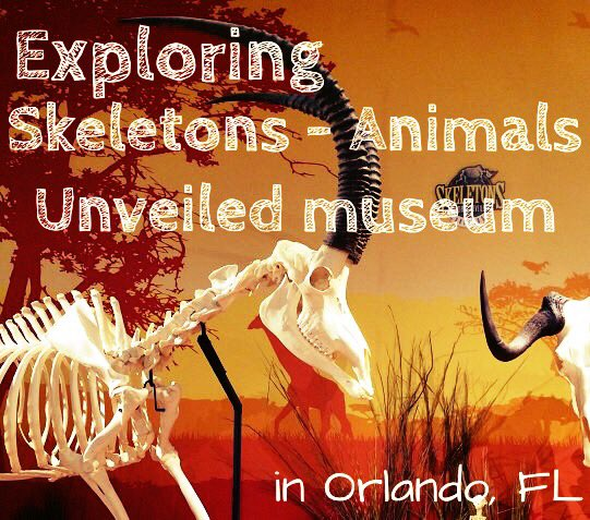 Skeletons Animals Unveiled museum attraction in Orlando FL