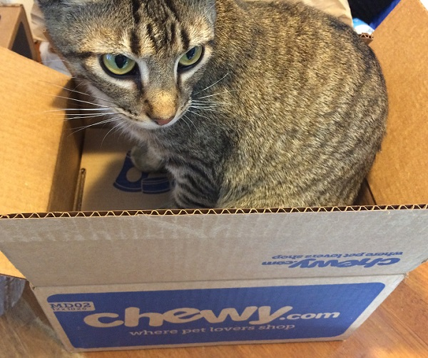 chewy-cat-box