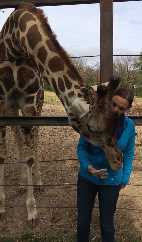 Giraffe encounter at Dickerson Park Zoo Springfield MO