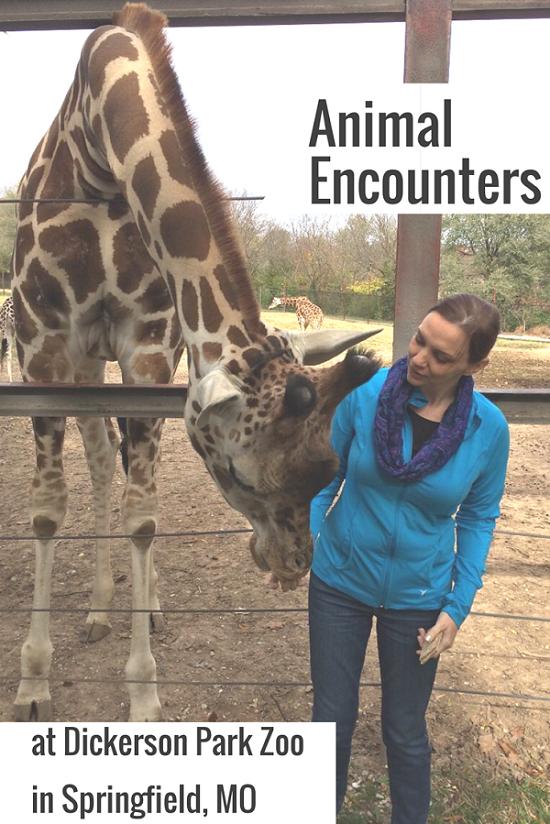 zoo-animal-encounters