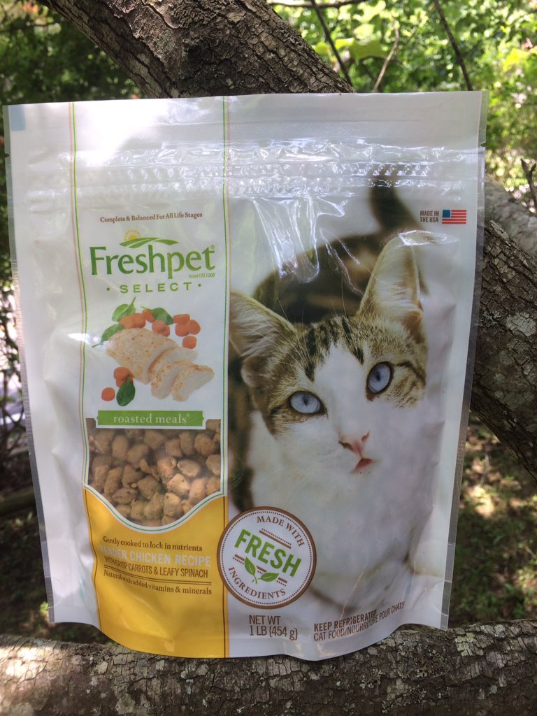 Its friday cat pictures it s friday so it s time for - It S Easy To Feed Like Dry Food But It S Softer And Moister The Resealable Bag Made Me Ok With Sticking It In The Fridge And Not Feeling Weird About Cat